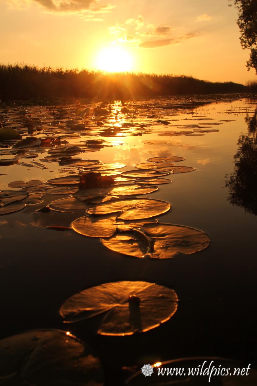 Delta du danube immerg dans l histoire du vivant - Heure de coucher du soleil aujourd hui ...