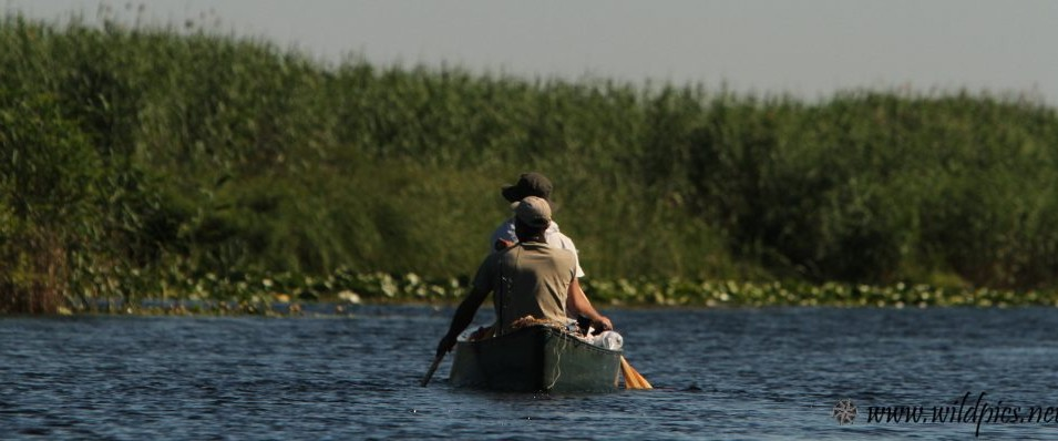 Danube delta, widest european wetland
