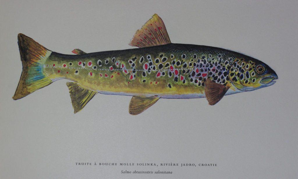 Pourquoi y a t il 110 esp ces de poissons dans les balkans for Marre a poisson